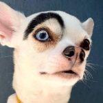 Необычный пёс «рвет» соцсети