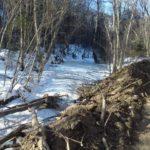 «Черные лесорубы»орудуют в Приморском крае