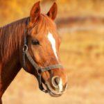 Лошадь спасла наездницу от смертельной болезни