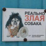 Зашевелились: сообщения о многочисленных нападениях собак не остались без внимания