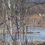 При загадочных обстоятельствах: больше 1,5 тысяч птиц нашли мертвыми у озера