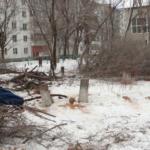 «Настоящее варварство»: директор школы уничтожает деревья