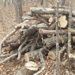 Заслуженный врач России трагически погиб в лесу