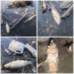«Всплыла кверху брюхом» - «мертвое озеро» привлекло внимание экологов