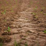 """Агропромышленная компания """"Альянс"""" планирует возделать около 5 000 га земли"""