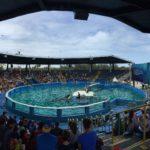Необычную экскурсию для морского льва организовали в океанариуме