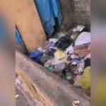 """""""Ужас"""": видео не для слабонервных сняли в центре города"""
