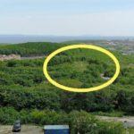 «Администрация,  вмешайтесь»: в густонаселенном районе «варварски» рубят деревья