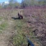 «У мужика стальные нервы»: противостояние человека и медведя попало на видео