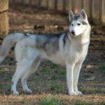 Владельцев домашних животных ждет новый закон
