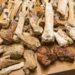 Кости древних существ нашли в российской пещере