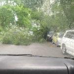 «Лексус уже попал, проезда нет»: деревья падают во Владивостоке одно за другим