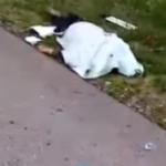 «У тебя сильный ангел-хранитель, парень»: военнослужащий заснул за рулем в Приморье