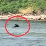 «Боялись акул,  а сейчас еще и это»: неожиданный «гость» застал врасплох приморцев