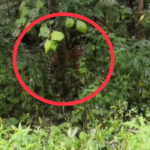«Говорят, списывается 40 грехов»: «не очень приятная встреча» случилась в Приморье в лесу