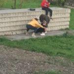 «Это ужас»: «собачий кайф» школьниц запечатлели жители Приморья
