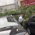 Огромное дерево упало на автомобили из-за тайфуна