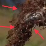 «Напоминает фильм «Мгла»: «ужас» сняли на видео на железной дороге в Приморье