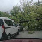 Огромное дерево рухнуло на автомобиль с людьми