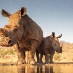 На 68%: неутешительные данные озвучил WWF