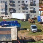 «Цирк шапито»: необычные «соседи» появились прямо в одном из дворов