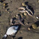 """""""Пляж начал превращаться в кладбище"""": животные гибнут, люди страдают и бьют тревогу"""