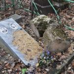 Делается впервые  и растянется на несколько лет: кладбища во Владивостоке ждут перемены