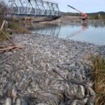 «Сын увидел – это беспредел»: на реке массово сдох лосось