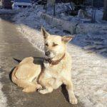 Продолжает ждать хозяина: одинокую собаку заметили возле подъезда