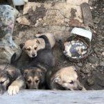 """""""Приютите, пока не поздно"""": жители нашли четырех щенков"""