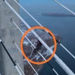 «Мне от просмотра плохо стало»: как альпинисты чистят мост на Русский от наледи