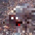 «Животные, просто животные»: растерзанный труп нашли на сопке поутру