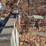 «6000 и проблемы нет»: ситуация на Морском кладбище тревожит горожан