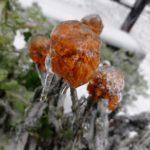 Ледяной дождь во Владивостоке прокомментировали в Москве
