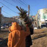«Очень дорого»: продавцы ёлок торгуют новогодним настроением