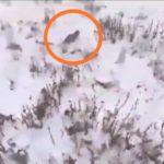 Привлекают его не люди: опасный хищник «хулиганит» в Приморье