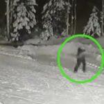 Ценой собственной жизни: чудесное спасение ребенка от волка попало на видео