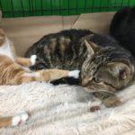 Последняя возможность: трем кошкам и щенку ищут дом