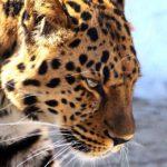 Уникальную возможность предлагают любителям дикой природы