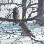 «Что за красавцы прилетели»: две птицы попали под пристальное внимание