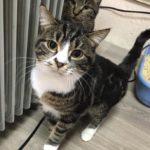 «Как зима, так никому не нужны»: приют пристраивает бездомных животных