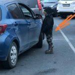 «Хотели позвонить в полицию – убежал»: автолюбителей просят помочь