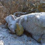 «Она весь год нам мстила»: знаменитая на весь Владивосток мышь найдена в неожиданном месте