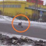 «Вы это видите? Какой кошмар»: драка с огромной крысой попала на видео