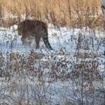Истощена и обморожена: печальную находку обнаружили в лесу