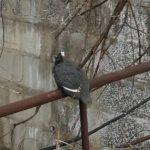 «Воробей с Дальхимпрома»: в сети  гадают, что за птица на фото