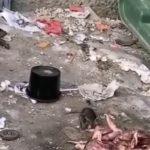 «Люди-свиньи»: крысы заполонили мусорки города