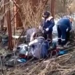 «Там родила медвежонка и напала»: возле базы отдыха в приморской бухте отдыхать опасно