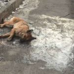 «Умереть боюсь». Как жительница Уссурийска просто так спасает бездомных животных