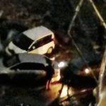 """""""Проезда нет"""": столкнулись два автомобиля"""